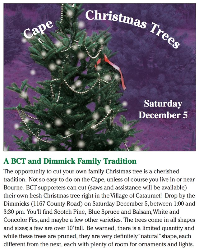 Cape Christmas Trees