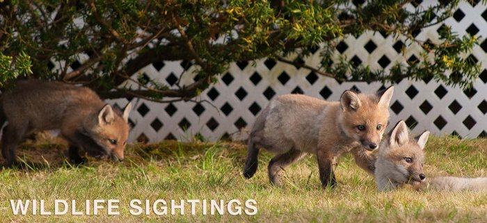 Wildlife sightings